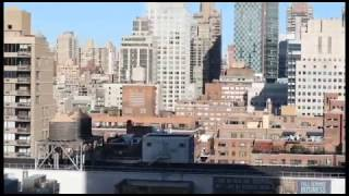 The Concrete Jungle || A Short Film by Hope Gallagher