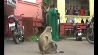 INDIA FUNNY MONKEY