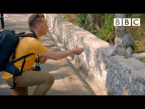 Why are these monkeys stealing from tourists World s Sneakiest Animals Episode 2 Preview BBC