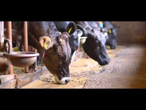 Hokkaido - Bifuka - Memories Of A Dairy Farm