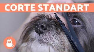 ¿Cómo cortar el pelo a un perro? 🐶 CORTE BÁSICO | Animal Salut