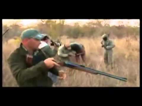 caçador vira caça !!