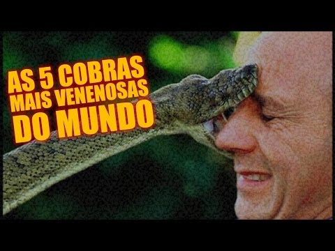 As 5 cobras mais venenosas do mundo Diário do Curioso