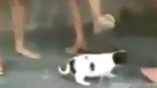"""Illegale Videos: """"Animal Crushing""""/ Asyl für Lesben und Schwule - Wochenrückblick 2 go"""