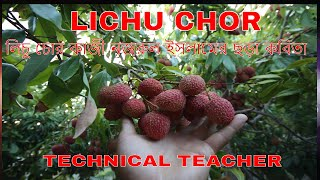 Lichuchor - SRIPORNA MONDAL।। Poems of Kazi Nazrul Islam
