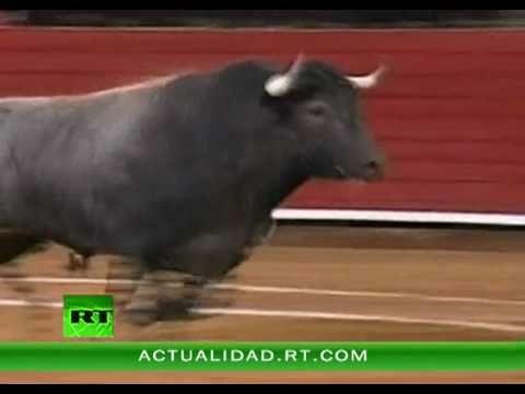 Video un toro de 500 kilogramos saltó la barrera y cayó sobre un picador