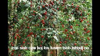Tshuaj kho zoo mob kas cees.. xav yuav no hu nug tau .. 0970575007