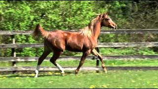 SC Klassy sale horse