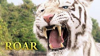 Tigers Of The Sundarbans
