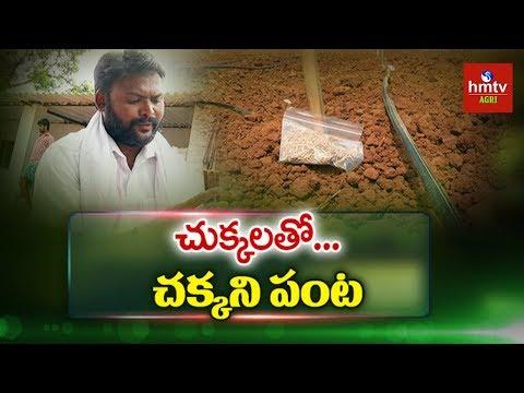Xxx Mp4 బిందు సేద్యం బోదె పద్ధతిలో వరి సాగు Desi Paddy Cultivation Hmtv Agri 3gp Sex