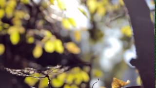 autumn 24- film footage, free download, free stock, clips, video effects