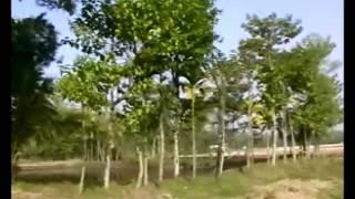 Oi Amar Cholar Poth Biswanath Sylhet