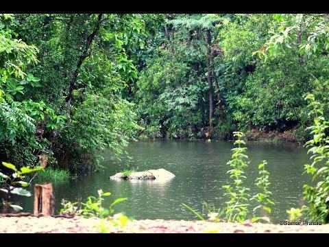 Xxx Mp4 Sutan Forest Natural Beauty Bankura West Bengal 3gp Sex