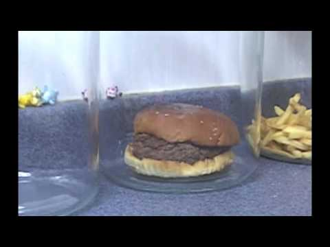 The Decomposition Of McDonald's Burgers And