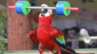 FUNNIEST PARROTS - Cute Parrot And Funny Parrot Videos Compilation [BEST OF]