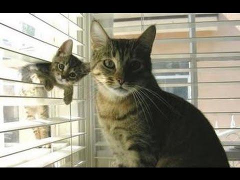 Amor de Madre Los mejores Videos de Mamás Gato y sus Hijos. Muy tierno