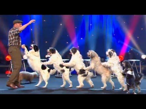 Wolfgang Lauenburger Dressage de Chiens Le Plus Grand Cabaret Du Monde