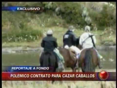 Reportaje CHV caza ilegal de caballos en Yendegaia