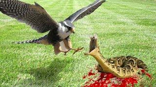 Most amazing wild animel attack sneke and bird attack by technical history  TechnicalHistory