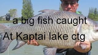 A big carp fish caught at kaptai chittagong by fishing hook