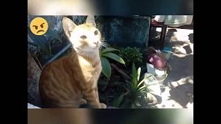 Funny Whatsapp tamil videos ( tamil cat)