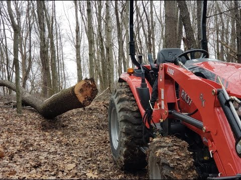Xxx Mp4 355 PULLING DOWN HUNG TREES RK 37 In The Woodlot 3gp Sex