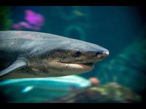 Live Shark Cam - Monterey Bay Aquarium