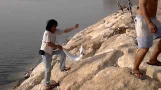 al khobar holyday fishing 7kilo lapis by nady.mp4