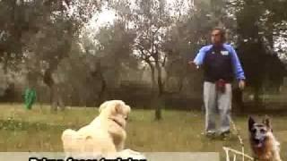 addestramento cani come addestrare il tuo cane addestramento scuola prima parte.flv