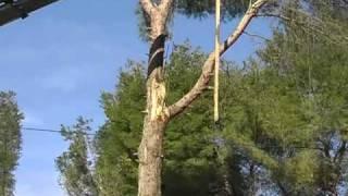 Poda y tala de árboles de altura con ayuda de grúa