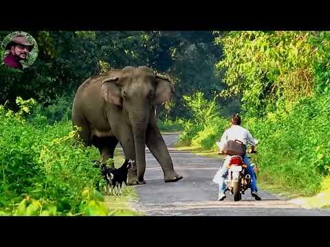 Xxx Mp4 Behavior Chasing Of Elephant Part 1 3gp Sex