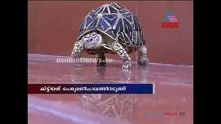 Star tortoises found in Kollam Ashtamudi Lake : Chuttuvattom News