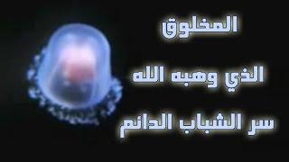 شاهد المخلوق الذي وهبه الله  سر الشباب الدائم ولا يموت بشكل طبيعى !