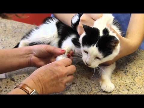 Contenção Veterinária Gatos