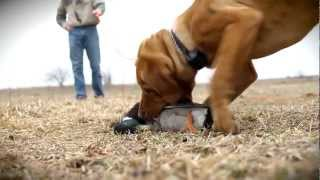 D.T. the Dog Training Video 1   Choosing the Right Dog