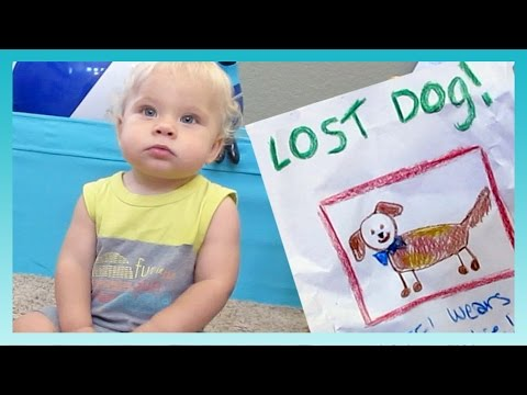 LOST DOG! | Look Who's Vlogging: Daily Bumps