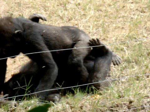 monkey porn on a girls trip to atlanta