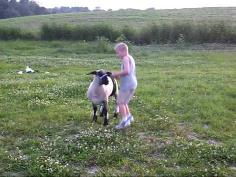 travis video sheep ride