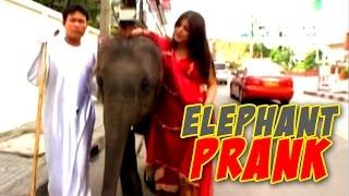 Naughty Elephant Prank [Gone Wrong] | Shenaz Treasurywala