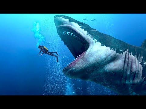 Xxx Mp4 समुद्र में मिलीं दुनिया की सबसे विशाल मछली LARGEST Shark In The World Megalodon Hindi 3gp Sex