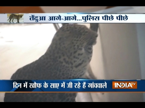 Rajasthan: Drone Deployed to Search Man-eater Leopard in Alwar