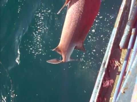 peniche mar puro pesca de largo