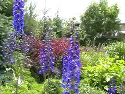 Mój ogród Czerwiec 2009