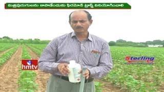 Anantapur Dist Farmers Earns High Profits From Papaya Crop Cultivation | Nela Talli | HMTV