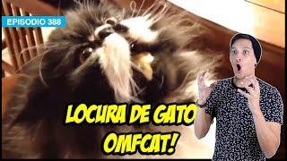 Locura de Gatos ! Regreso OMFCAT!