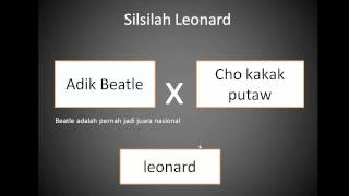 merpati balap leonard legendaris