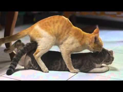 Xxx Mp4 Cats Making Love 3gp Sex