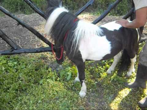 Venta Ponys