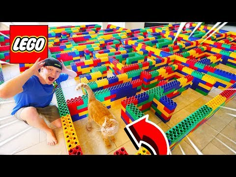 WORLD S BIGGEST Maze for Cats Can the Kitten ESCAPE