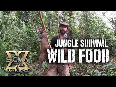 Living off the Jungle Wild Foods Tour